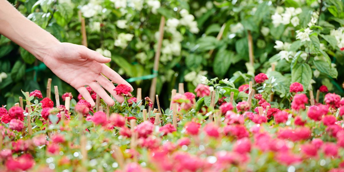 Mano che sfiora delle piante con fiori