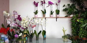 la-magnolia-italyra-gallery