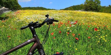 Bicicletta e campagna